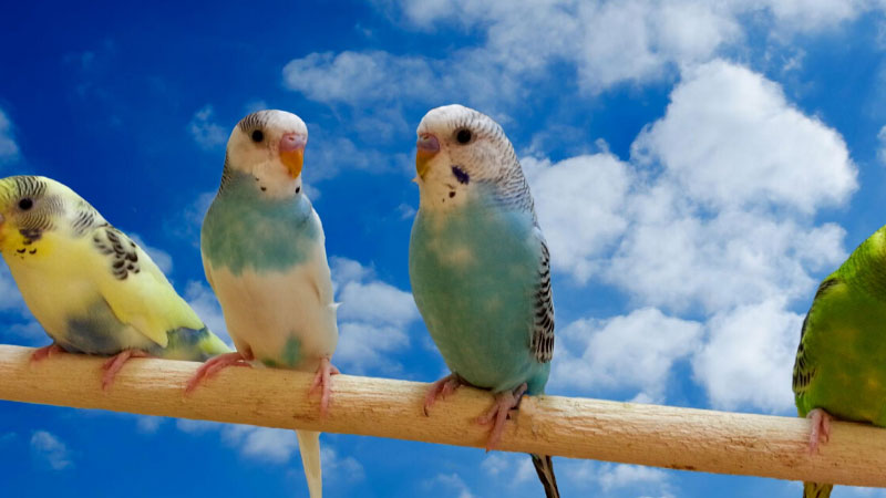 Budgie DIY Cloud