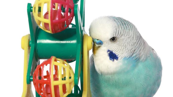 Spinin Birdie