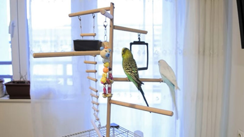 budgie Butter Tub Gym