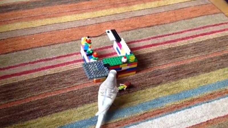 budgie Lego Palace