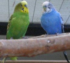 v_bluegreen1