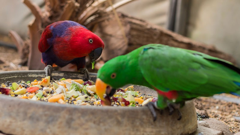 Best-Parakeet-Food-Reviews