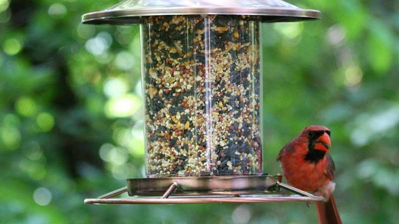 Start A Bird Feed Manufacturing Company from Scratch